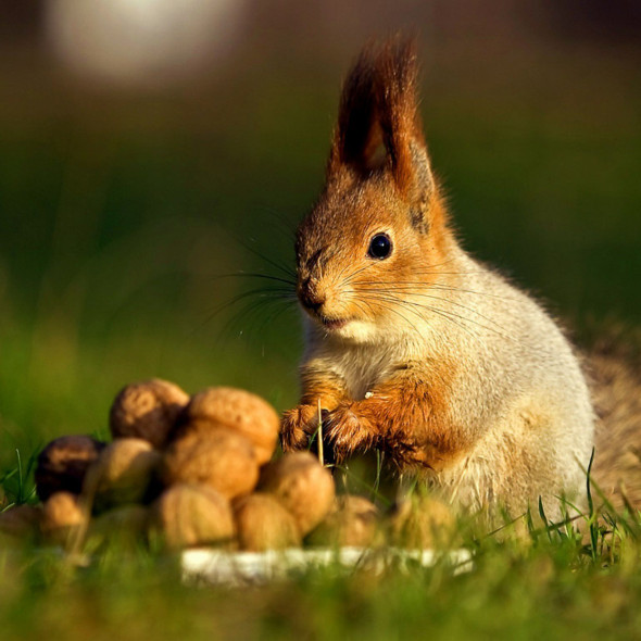 orzech pusc-nuts-squirrels-1686316-1660x1215